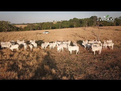 Fazenda com 82 alqueires - Aragoiânia/GO - FA0005