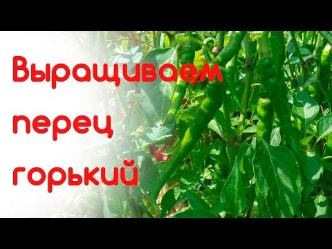 Выращиваем перец горький