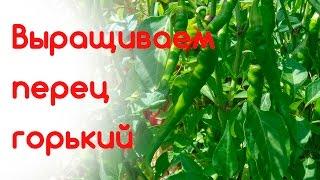 Выращиваем перец горький(, 2016-07-10T09:40:39.000Z)