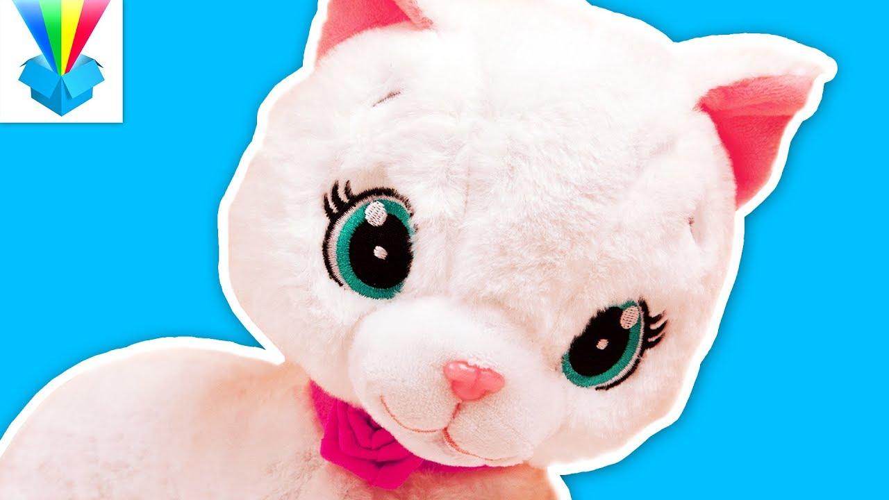 A cica elvesztette a látását A látás plusz és mínusz