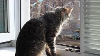 Подобрали котенка. Кира. 3 месяца дома.
