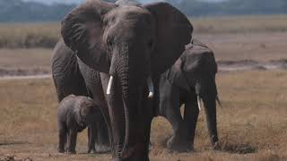 World Elephant Day 2020