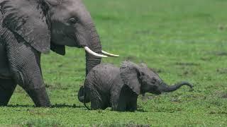 World Elephant Day 2020