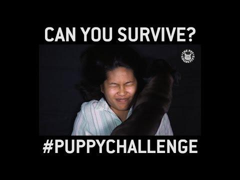 The Puppy Challenge