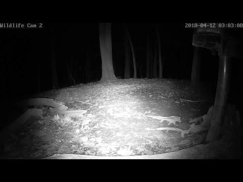 Live Deer & Wildlife Webcam 2