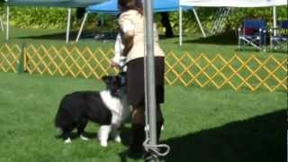 Bcs Best Of Breed- 3/22/13- Oakland Kennel Club