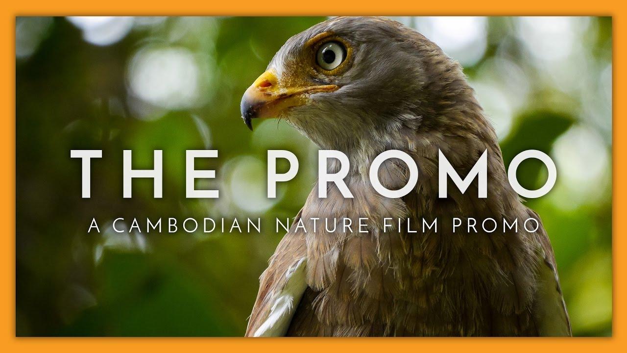 Nature Film — Fauna in Focus