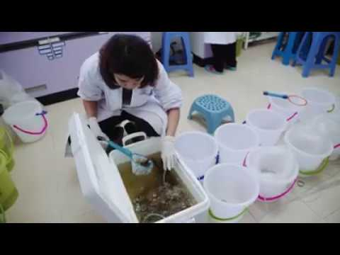 Farmers in Thailand adopt new technology to monitor health and prevent diseases in shrimps.