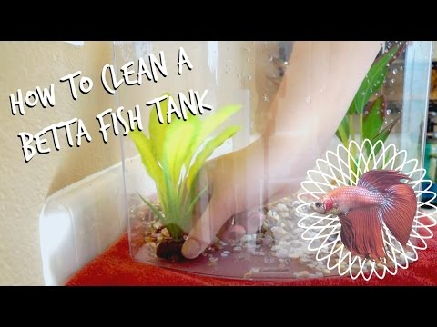 how to clean a betta fish tank -