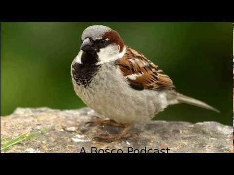 The Sparrow - The Meaning Of Birds Episode 1