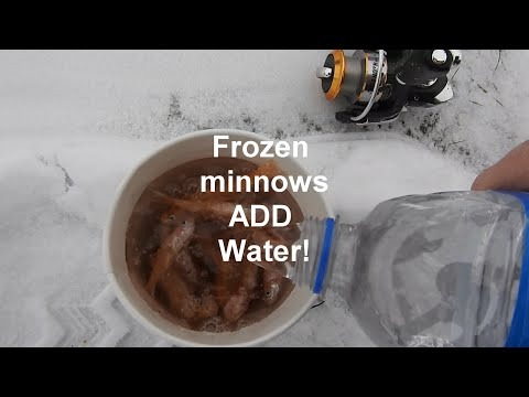 Debunking the ECOSYSTEM!-Frozen then ALIVE!-Ice Fishing!