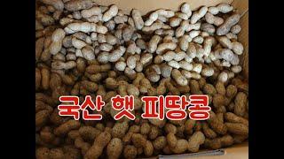 농산물직거래로 구매한 국산 햇 땅콩,  삶아 먹어도 맛…