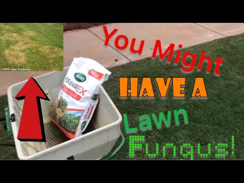 How to prevent and cure lawn fungus with fungicide - YouTube