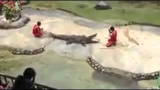 Scary Croc almost kills its caretaker - Thailand