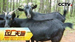《农广天地》养羊达人的新宠  养羊门外汉发现电商新大陆年赚超百万 20190716 | CCTV农业