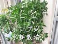 ししとう (ポンプ式水耕栽培器) の動画、YouTube動画。