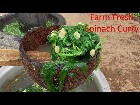 HEALTHY FARM FRESH SPINACH CURRY IN VILLAGE STYLE