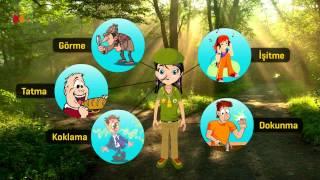 3. Sınıf Fen Bilimleri - Duyu Organlarımızı Tanıyalım - Morpa Kampüs