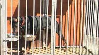 Пожилые цирковые собаки ищут новых хозяев