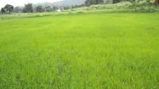 Chittu Kuruvi mutham tharuthu