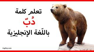 دب باللغة الإنجليزية L سلسلة أسماء الحيوانات بالإنجليزية Youtube
