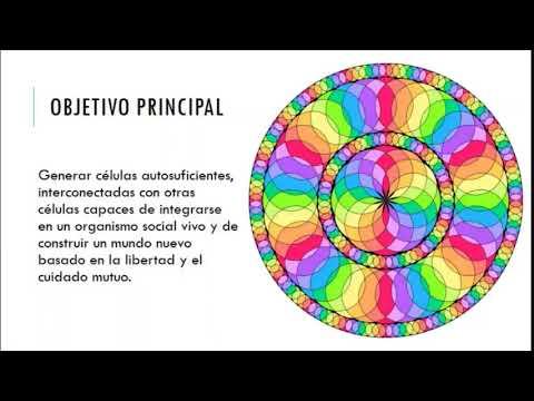 GENESIS DE UN MICELIO UNIVERSAL, explicación del proyecto - YouTube
