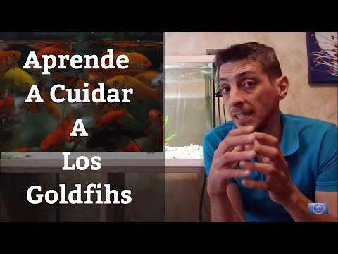 🔵 Aprende A Cuidar A Los Goldfish Japoneses (Acuarios MB)