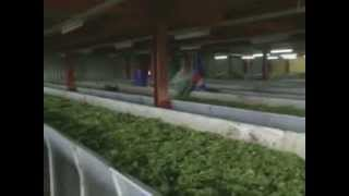 Tours-TV.com: Tea production in Rwanda