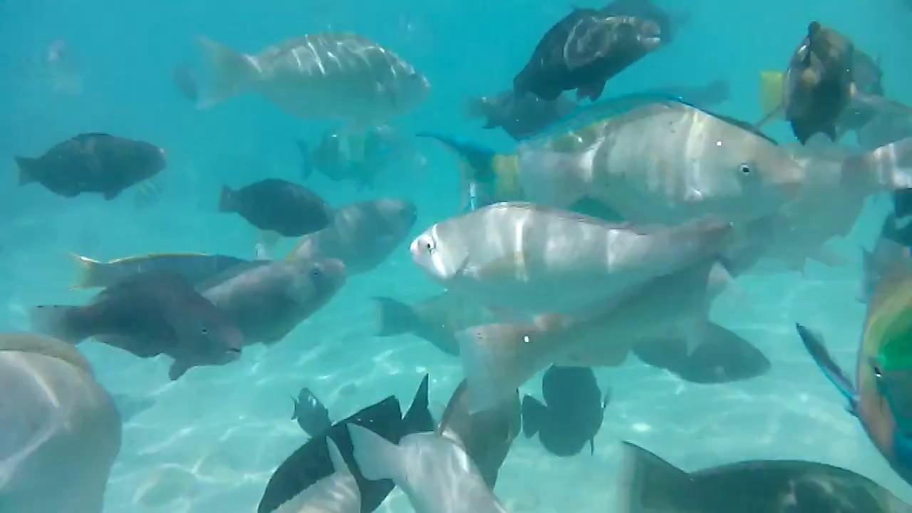 Египет  Красное море  Разновидности рыб
