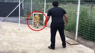 Этот Лев не Видел Своего Хозяина 7 Лет…Посмотрите, Что Произошло