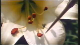 Enciclopedia Americana, Botánica, Cómo Producen Las Flores Sus Semillas