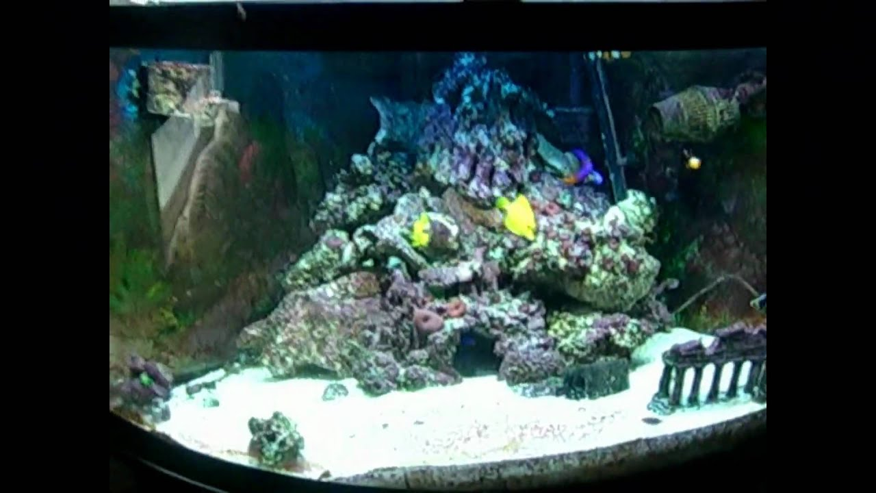 Saltwater fish tank youtube - 92 Gallon Corner Saltwater Aquarium Fish Tank