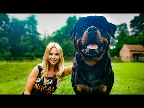 THE ROTTWEILER - FEROCIOUS GUARD DOG OR FAMILY PET?