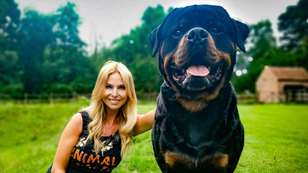 THE ROTTWEILER - FEROCIOUS GUARD DOG OR FAMILY PET?
