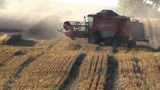Zniwa 2010 - Koszenie pszenicy/ Harvest wheat / Massey Ferguson Activa 7244 / Case cvx 150 / JD 6630