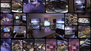 New Record ! My Living Fishroom Filmed with GoPro !!! More than 500 Gallons of tank  (2000 litres)