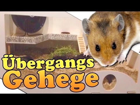 Hamster Einrichtung ♥ Provesorisches Zuhause für ...