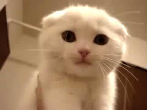 видео: Наган и кот  39 й клип флудилка групп