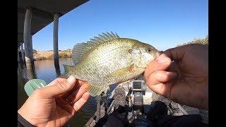 Catch n' Cook California Delta Bluegills/Redears