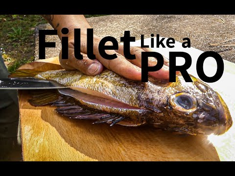 How To Sharpen Knives And PROPERLY Fillet Fish For BEST RESULT!!