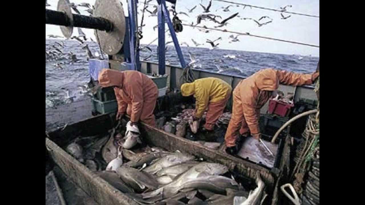 Northwest atlantic cod declining youtube for Atlantic cod fish