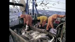 Northwest Atlantic Cod Declining