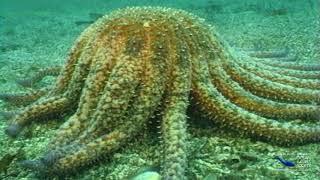 SeaScope 45 Q&A Food Web