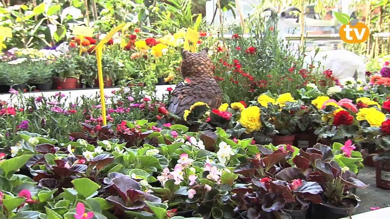 Centro de jardiner a gorbeia 1er aniversario youtube for Centro de jardineria