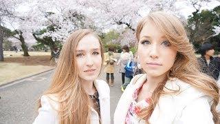ロシア人二人で新宿御苑の桜を見に来ました!〜Синдзюку гёэн, сакура ханами ☆ thumbnail