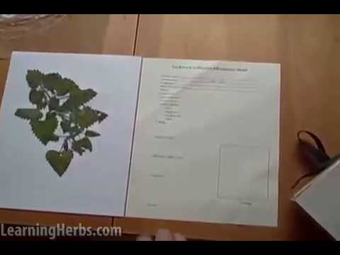 How To Make An Herb Press And Herbarium Part 2