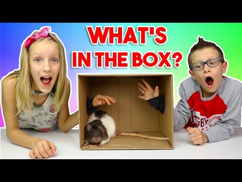 Thumbnail: What's in the BOX Challenge!!!!!!