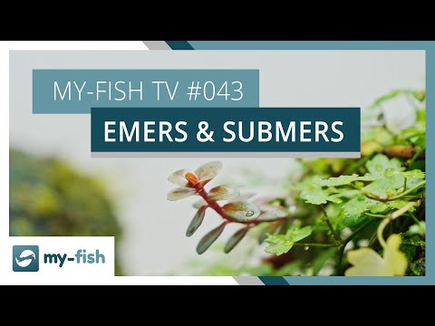 Aquarienpflanzen über und unter Wasser | my-fish TV