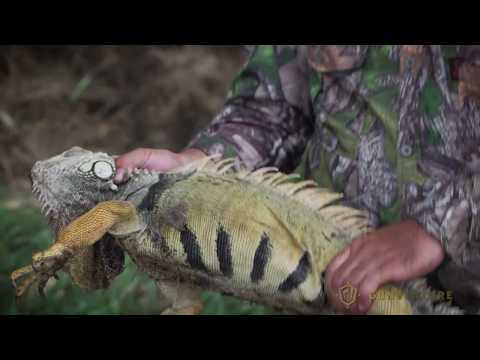 Hunting Iguanas With Air Rifles In Puerto Rico: GunVenture| S2 E10 P2