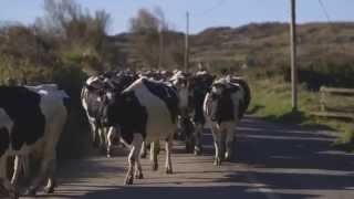 Kieran and Catherine O'Sullivan, Quality Milk Awards winners